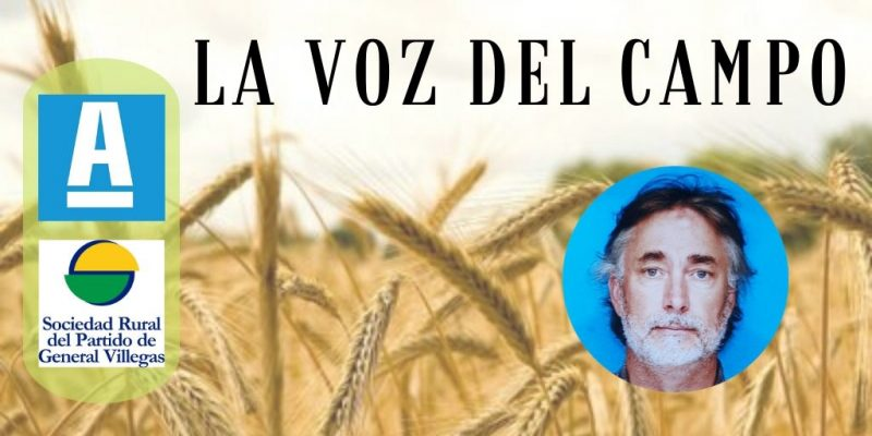El trigo: origen de la actividad agrícola, base de nuestra alimentación y un mercado que el país no deberíadesaprovechar*